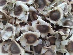 Generic Natural ODC Moringa Seeds, Packaging Type: Packet, 10 kg
