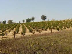 Agricultural Land Development, Patna