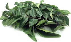 Curry Leaves Testing Services