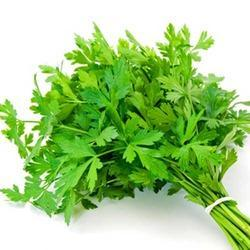 Parsley Leaf Meaning In Tamil | Theleaf.co