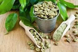 Green Coffee 50% Chlorogenic Acid