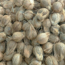 Coconut in Salem - Latest Price & Mandi Rates from Dealers