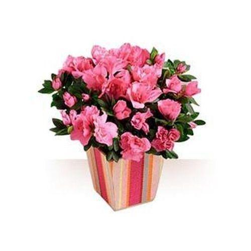 225 & Flower Pot