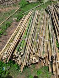 Bamboo for tree support
