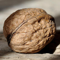 Tuned Food Walnut Dry Fruits With Shell - California / Kashmiri, Packaging Size: 1 Kg / 1/2 Kg, Packaging Type: Pet Jar