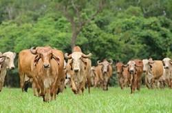 Gir Cow Milk, Packaging Type: Packet