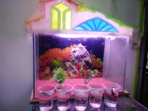 fish tank setup at rs 1700 set aquarium fish id 15392738212