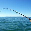 Camping, Fishing & Hunting Goods