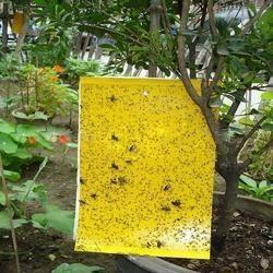 Yellow Sticky Trap 12 X 8  Inch