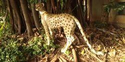 Chitta Animal Statue