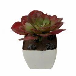 Succulent Plant (AP-23)