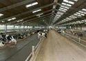 Steel Dairy Farm Sheds