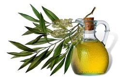 Aadinath Organic Tea Tree Oil, Rs 2800 /kilogram, Aadinath Organic ...
