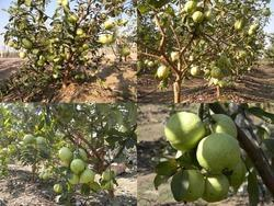 Open Cultivation