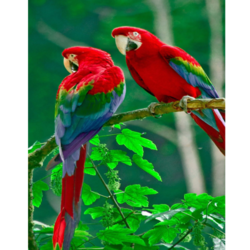Birds Picture