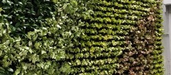 Bio Green Wall