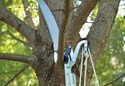 Tree Branch Pruner