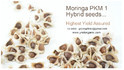 High Yield Moringa Pkm 1 Hybrid Seeds