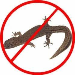 Lizards Controlling Treatment