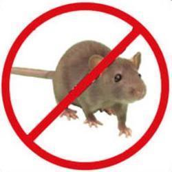 Rodent Pest Control Service
