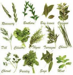 Indian Herbs at Rs 45/kilogram | इंडियन हर्ब्स, भारतीय ...