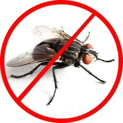 House Flies Control Services