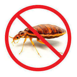 Good Bed Bug Treatment Service