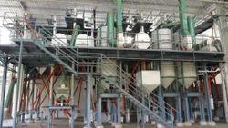 Urad Dal Plant