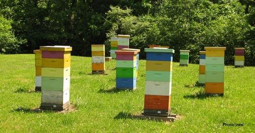 Image result for bee boxes