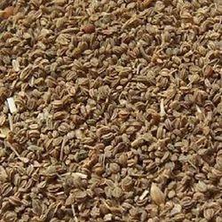 Carum Copticum Dry Seeds