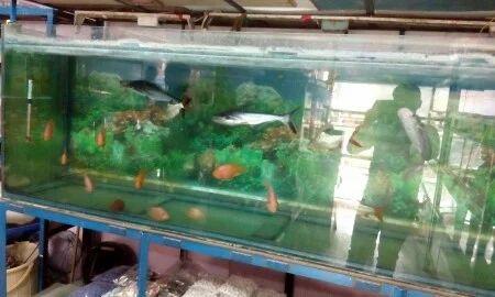 Aquariums And Big Aquarium Tank Wholesaler Praneetha Fish