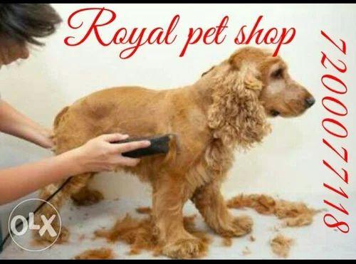 Royal Pet Shop Retailer Of Dog Trimming And Bothing Door Setup