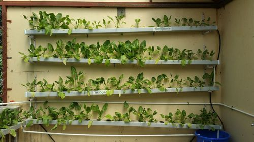 how to build a nft hydroponic system