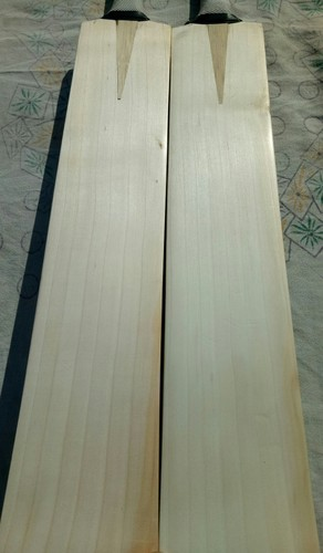 Best English Willow Cricket Bats