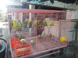 Bird Cages in Coimbatore, Tamil Nadu | Get Latest Price from