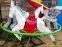 CODE: P13 Animal Merry Go Round