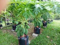 Plantation Solution In Indore प्लांटेशन सॉल्यूशन इंदौर