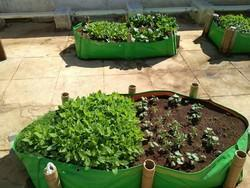 Maadi Thottam Organic Terrace Gardening Bags
