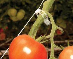 Tomato Trellising Clips