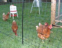 Chicken Wire Netting