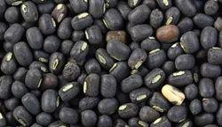 Black Gram (Urad), Pack Size: 100 Kgs/ 50 Kgs, Packaging Type: Jute Bag