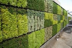 Green Wall Development Service