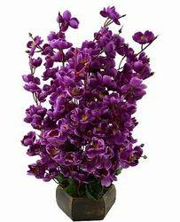 Hyperboles Blossom Flower Plant