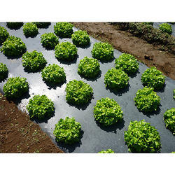 CPCB Certified (IS/ISO:17088) 100 % Biodegradable Mulch Film