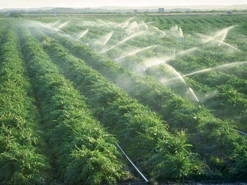 Technology Expert - Green Farming India in Kolkata, South Asia