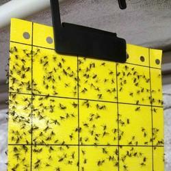 Enta Just Stick En Insect Sticky Fly Traps Non Toxic