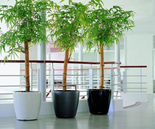 Decorative Planters - Self Watering Lechuza Planter Wholesale ... on gardens in srinagar, gardens in tokyo, gardens in india, gardens in lahore, gardens in bangalore, gardens in nairobi, gardens in kashmir, gardens in seoul, gardens in beijing, gardens in bangkok,