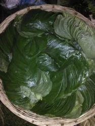 New Bangla Paan - Betel Leaf