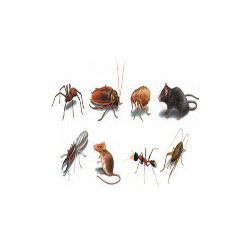 Tick and Fleas Treatment Services