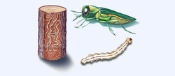 Wood Borer Management Services